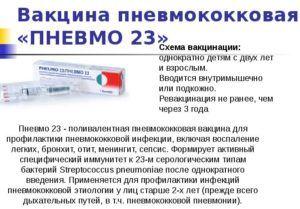 Фармакологическое действие вакцины Пневмо