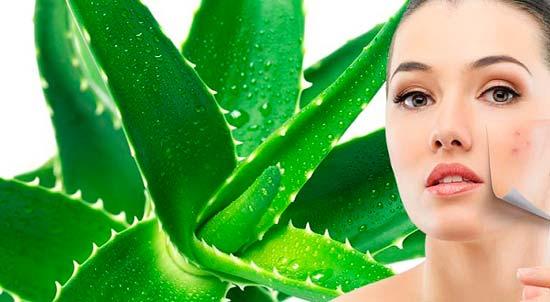 Целебная сила экстракта алоэ и его польза для кожи