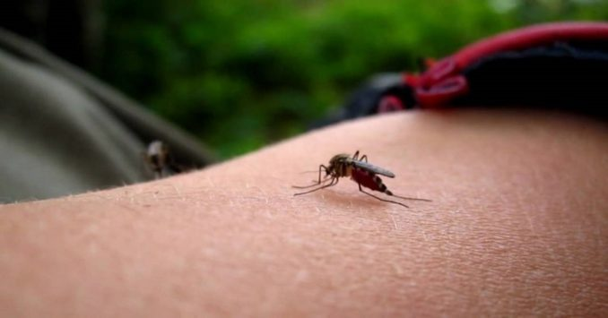 комар кусает руку