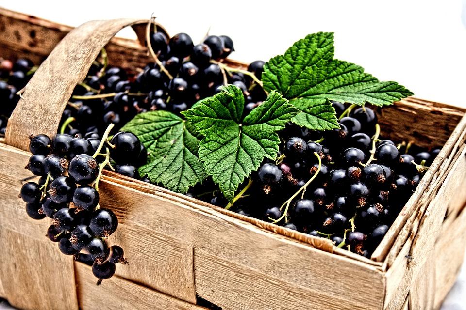 Черная смородина, протертая с сахаром на зиму: 5 полезных рецептов