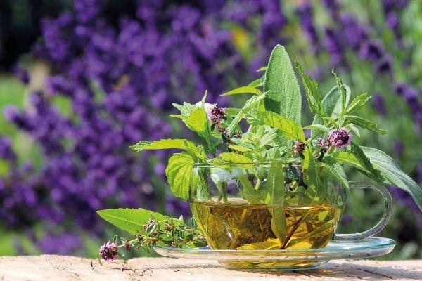 Лечебный чай из шалфея