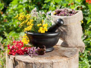 Лекарственные травы для лечения кашля