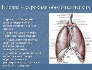 Оболочки лёгких