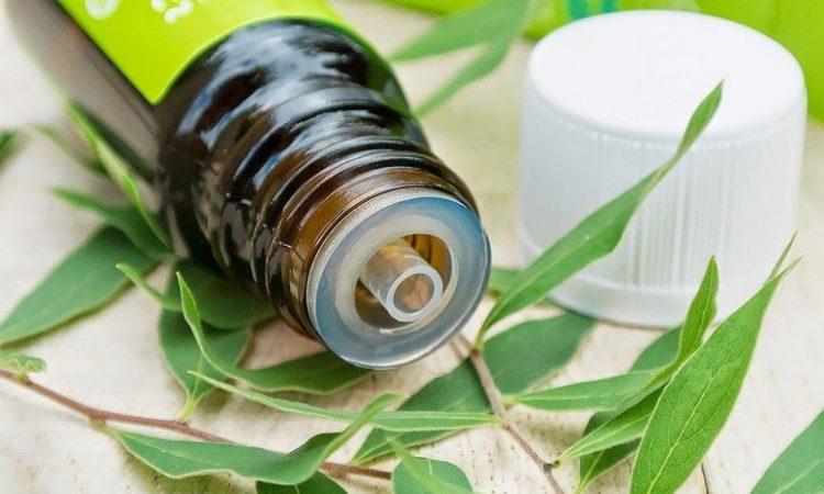 Масло чайного дерева: свойства и применение в медицине, косметологии