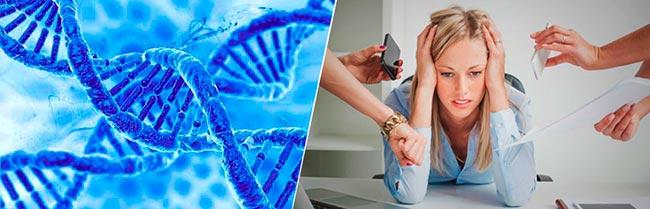 Stress Genetica