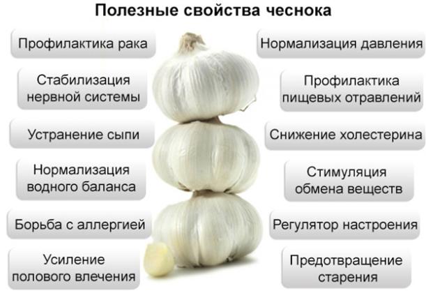 Целебные свойства чеснока
