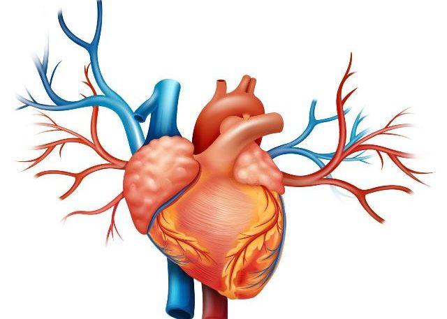 Изменение в правом желудочке сердца