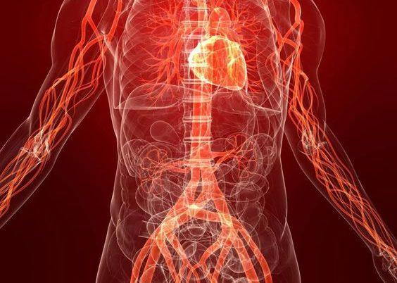 Насыщение кровеносной системы кислородом