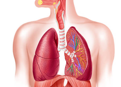Активизация защитных сил слизистой оболочки органов дыхания