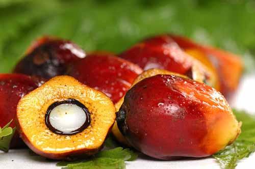 плоды карите
