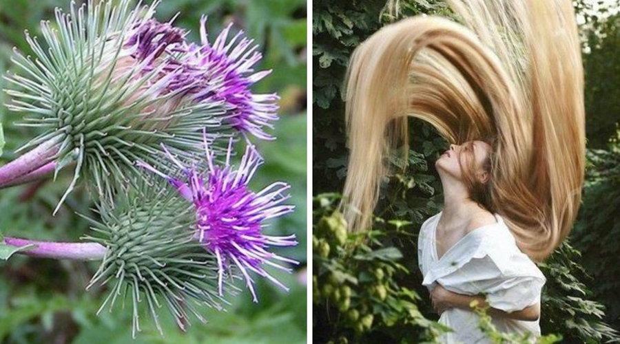 как правильно наносить репейное масло на волосы (2)