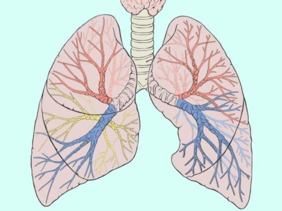 Водянистые мокроты являются признаком что в органах дыхательной системы протекает патологический процесс