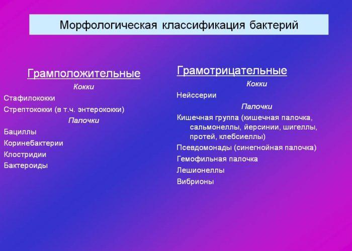 Граммположительные и граммотрицательные бактерии