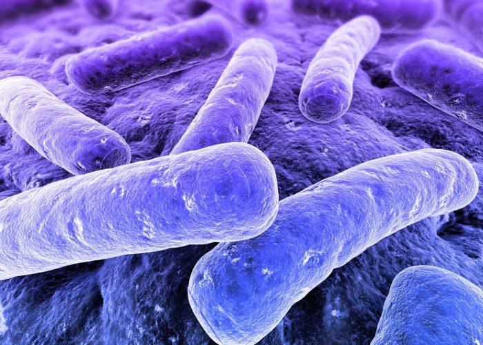 Анаэробные микроорганизмы
