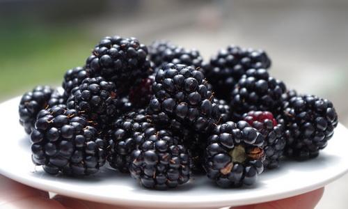 Черные продукты: почему такие, полезны или вредны