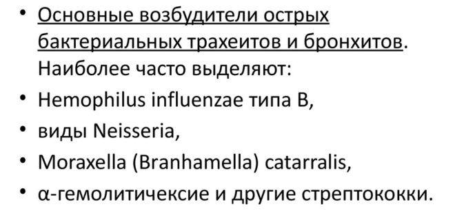 Основные возбудители бактериального острого бронхита