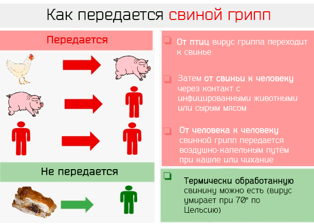Лечение свиного гриппа