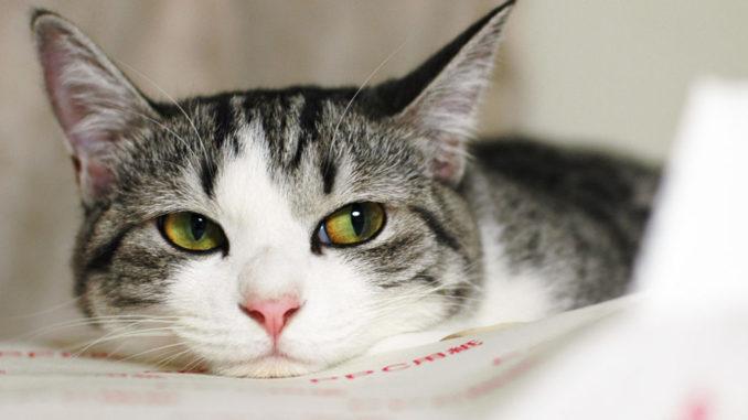 аллергия на кошачью шерсть