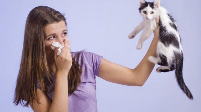 признаки аллергии на кота